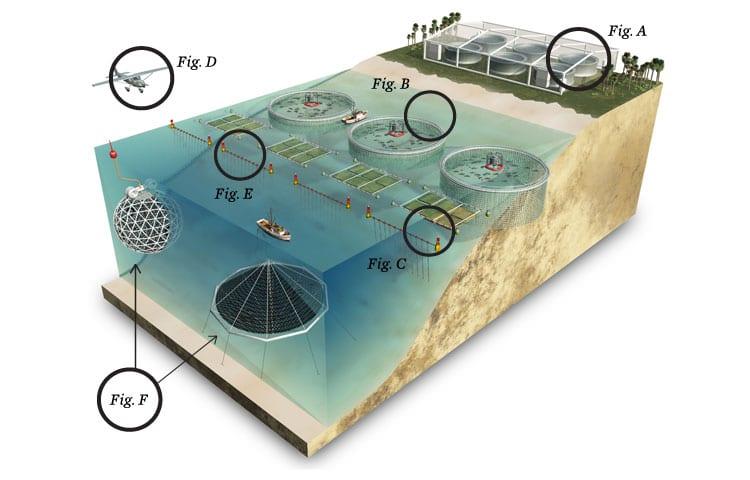 Infographic Fish Farming Oceana Usa