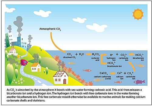 What is Ocean Acidification?   Oceana USA
